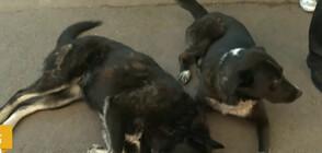 Съседи спорят опасни ли са бездомни кучета, отглеждани пред жилищен блок в София