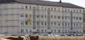 Защитници на животните на протест край кланицата - огнище на коронавирус