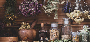 Bulgaria is the largest producer of herbs in Europe