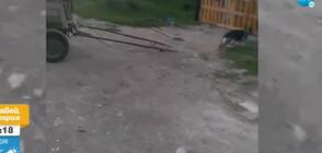 НАСИЛИЕ: Дете впрегна куче да дърпа каруца (ВИДЕО)
