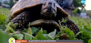 Какъв е животът в царството на костенурките? (ВИДЕО)