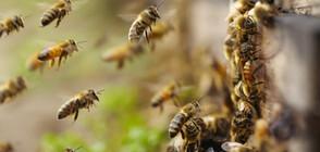 """""""ПЪЛЕН АБСУРД"""": Мъж отглежда пчели на балкона си в София (ВИДЕО)"""