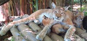Кога ще могат посетители на столичния зоопарк да се порадват на новите му попълнения?