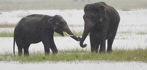 Масова смърт на слонове в Ботсвана