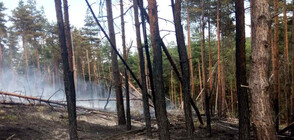 Пожар горя в Родопите (СНИМКИ)