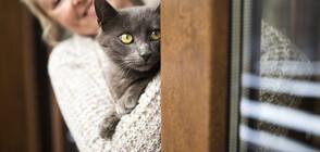 Почина най-възрастната котка в света (СНИМКА)