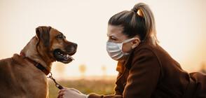 Обучени кучета ще надушват болни от коронавирус