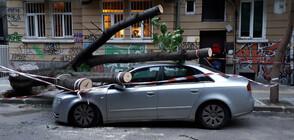 Дърво премаза кола в София (ВИДЕО+СНИМКИ)