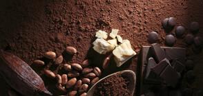 Шоколадът укрепва имунната система