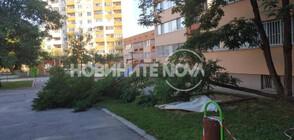 Вятър изкорени дървета в детска градина в София (СНИМКИ)