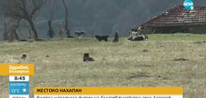 Кучета нахапаха жестоко мъж в село Логодаж