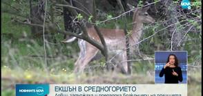 Ловци задържаха и предадоха бракониери на полицията