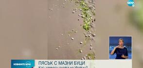 Мазни петна и буци изплуваха на плажа на Иракли