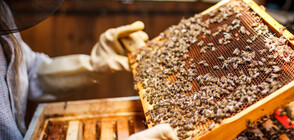 Пчеларите получиха кредити за над 500 000 лева