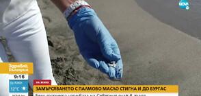 Бели топчета палмово масло изплуваха и в Бургас (ВИДЕО)