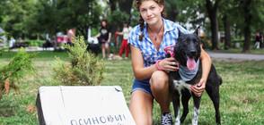 Над 600 са осиновените кучета от началото на 2020 година