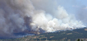 "Затвориха магистрала ""Марица"" заради пожар в Харманлийско (ВИДЕО+СНИМКИ)"