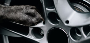 Упорито бездомно куче стана консултант в магазин за коли (СНИМКИ)