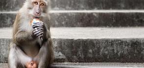 Маймуни се разхлаждат с ледени лакомства в горещините (ВИДЕО)