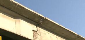 Десетки защитени птици са починали при ремонтни дейности в Казанлък