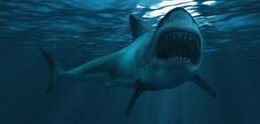 Сърфист скочи върху гърба на акула, за да спаси жена (СНИМКИ)