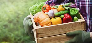 Как зеленчуците помагат на отслабването