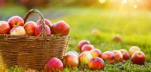 Яжте ябълки, но спазвайте тези правила
