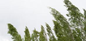 Силна буря удари Финландия, над 80 000 домакинства останаха без ток (СНИМКИ)