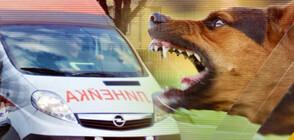 9-годишно дете е с 48 шева на главата след нападение от куче (ВИДЕО)