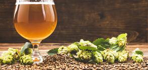 Кои са страните с най-много пивоварни?