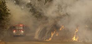 Расте броят на жертвите при пожарите в Калифорния (ВИДЕО+СНИМКИ)