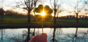 8 неща, които ще донесат късмет в дома ви (ГАЛЕРИЯ)