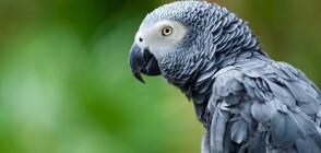Заради остър език: Зоопарк постави папагали в изолация