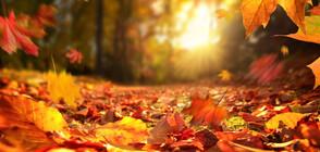 ЗЛАТНА ЕСЕН: До 35 градуса през октомври