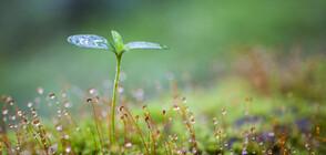 40% от растителните видове са застрашени от изчезване