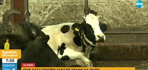 """Протест в """"Кремиковци"""" срещу излизащи на пътното платно животни"""