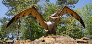 Учени с нови разкрития за динозаврите