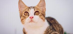 СЛЕД 48 ЧАСА В ТРЪБА И ПОД БЕТОН: Спасиха котка в Измир