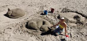 Пясъчни котки се появиха на плажа в Бургас (ВИДЕО+СНИМКИ)