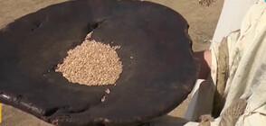 РЕЦЕПТА ЗА ПЪРВОБИТЕН ХЛЯБ: Какво е общото между праисторическата и съвременната кухня?