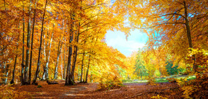 Променливо есенно време цяла седмица