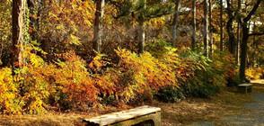 Жълт код за ниски температури в части от страната