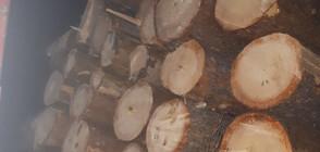 Горски екшън: Лесничеи преследваха и задържаха камион с незаконна дървесина