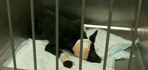 Брутално посегателство срещу куче в София (ВИДЕО)