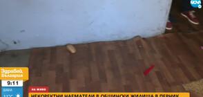 Некоректни наематели в общински жилища в Перник (ВИДЕО)