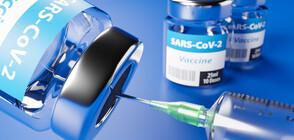 СЗО: 60-70% от световното население трябва да се ваксинира, за да спрем пандемията