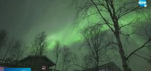 Заснеха красиво Северно сияние над Лапландия (ВИДЕО)