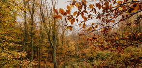 Хладно време в последните дни на октомври