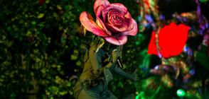 """Любимата Роза се завръща на сцената на """"Маскираният певец"""""""
