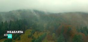 РАЗСЛЕДВАНЕ НА NOVA: Как се изсича общинска гора?